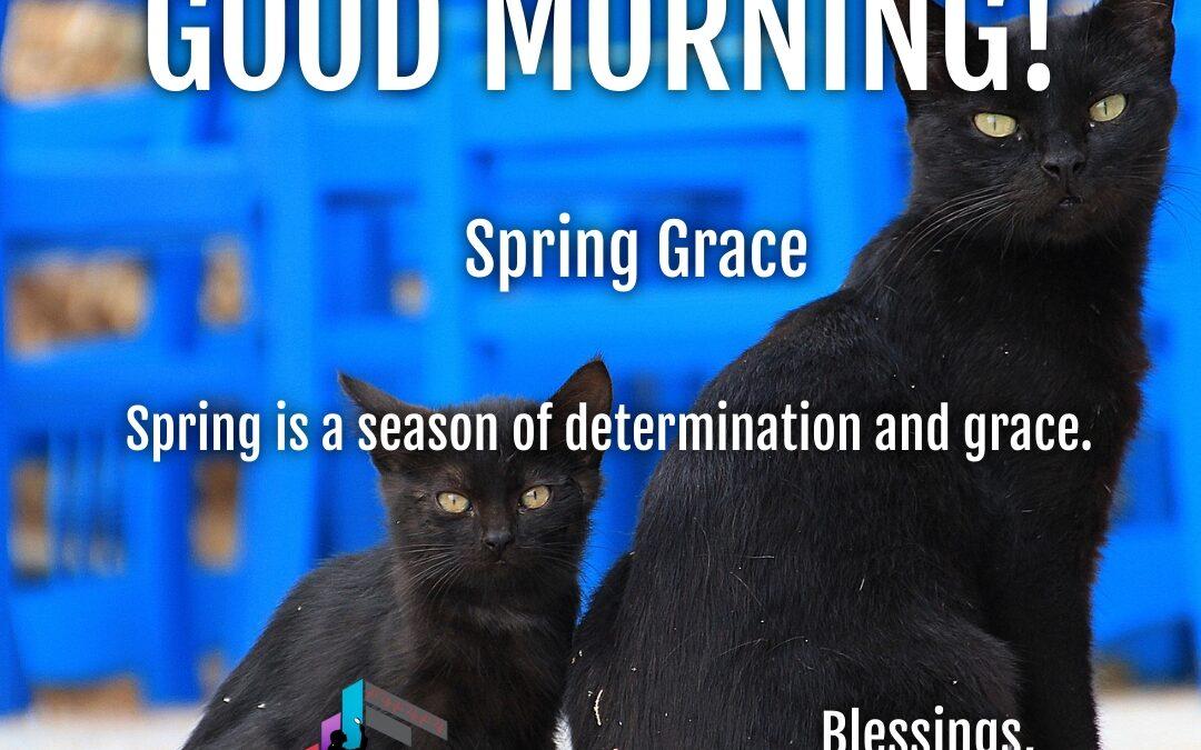 Good Morning: Spring Grace
